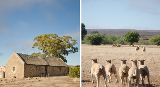Papkuilsfontein, a sheep guest farm accommodation in the Northern Cape