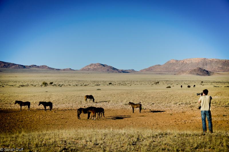Desert horses, Aus, Namibia