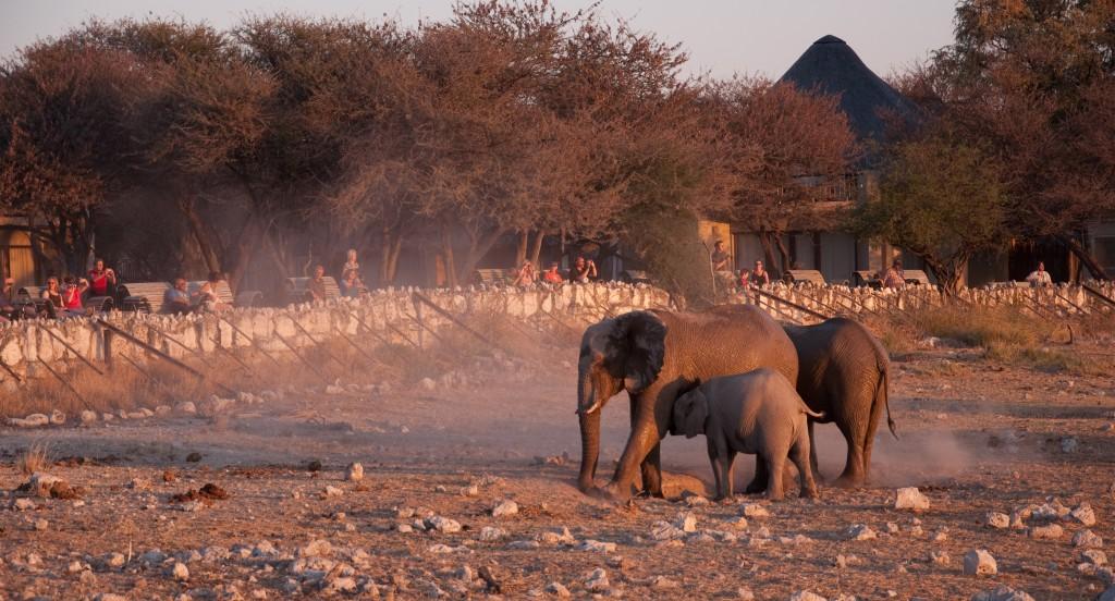 Okakeujo Camp, Onkoshi Camp, Etosha National Park, Namibia