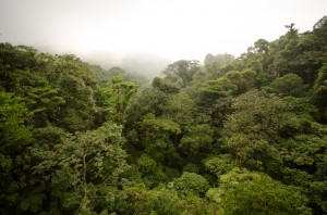The magic of Monteverde Cloud Forest
