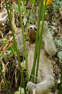 Sloth spotting, Manuel Antonio National Park, Costa Rica