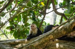 Monkey spotting in Manuel Antonio National Park