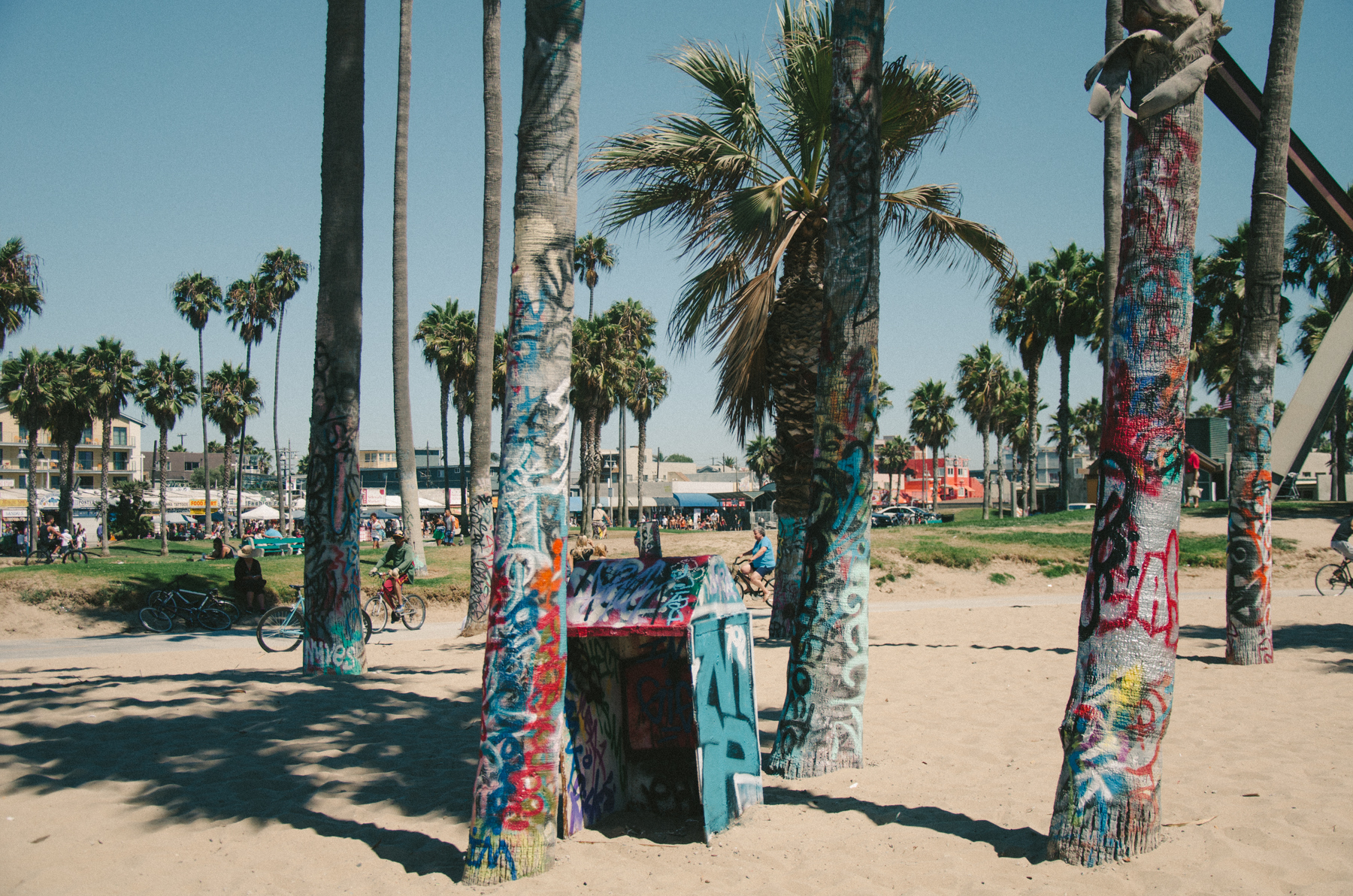 In Los Angeles, even the palm trees are covered in graffiti.