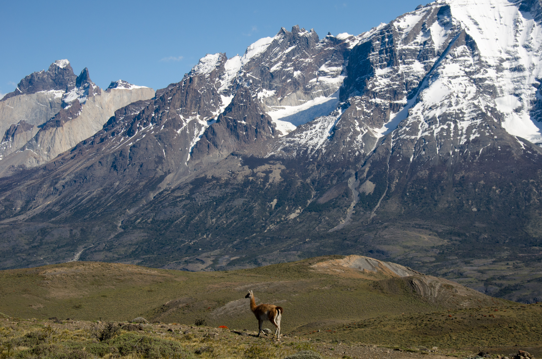 Guanaco spotting in the Torres del Paine National Park