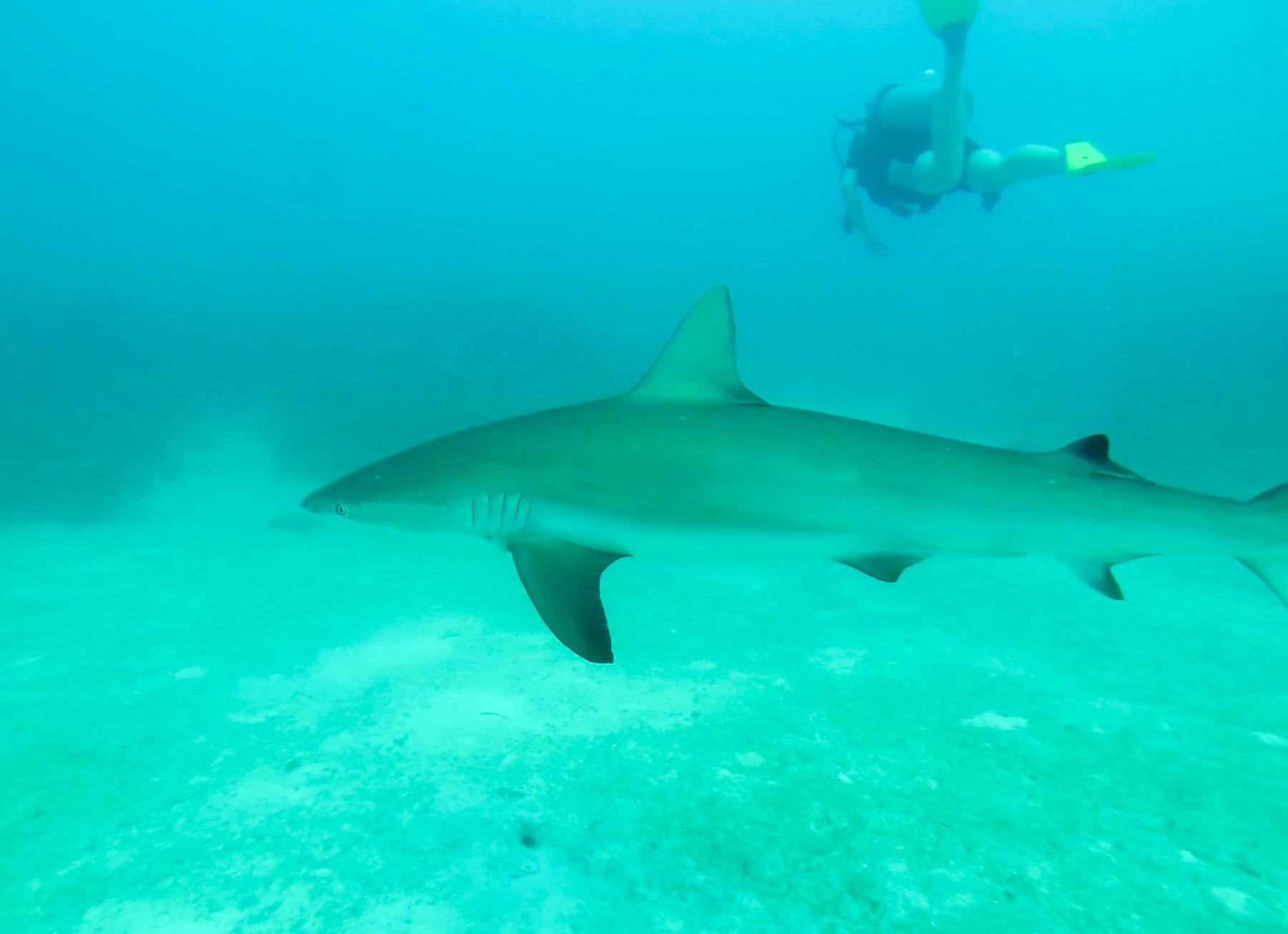 Diving, Providencia Island, Colombia