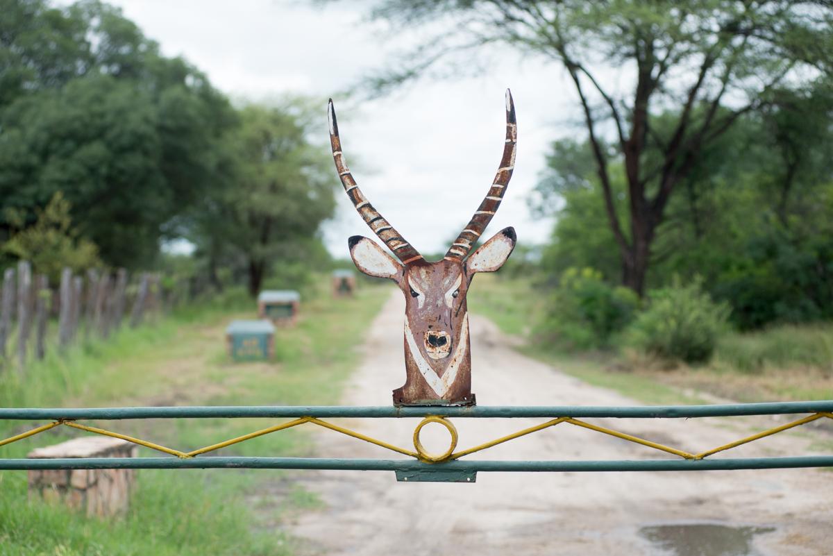 Elephants Eye Hwange Zimbabwe-4