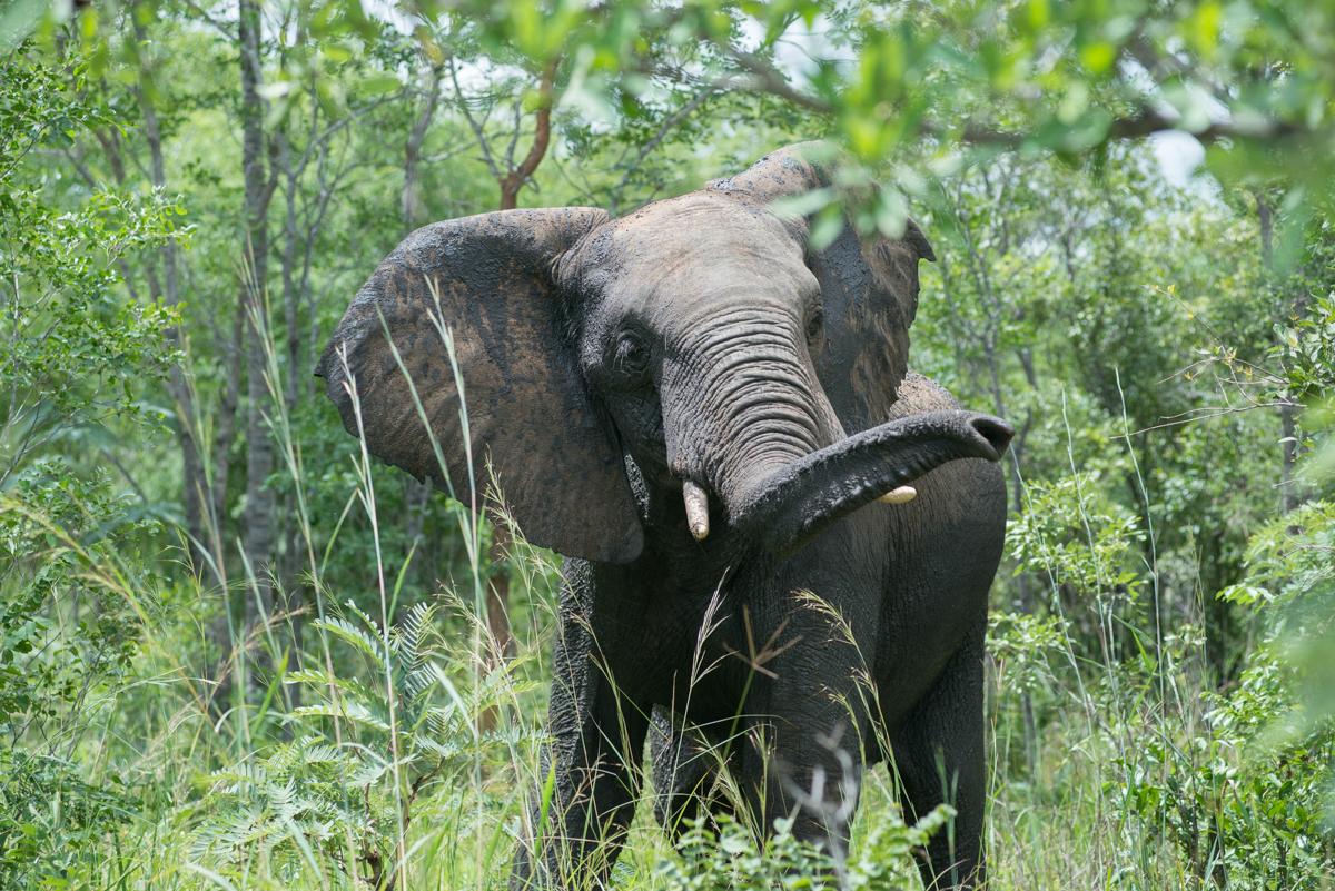 Elephants Eye Hwange Zimbabwe-5