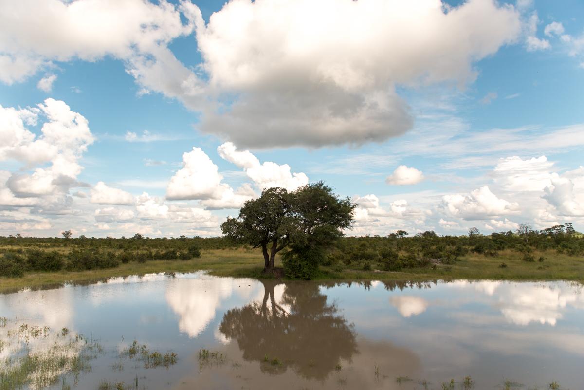 Elephants Eye Hwange Zimbabwe-6