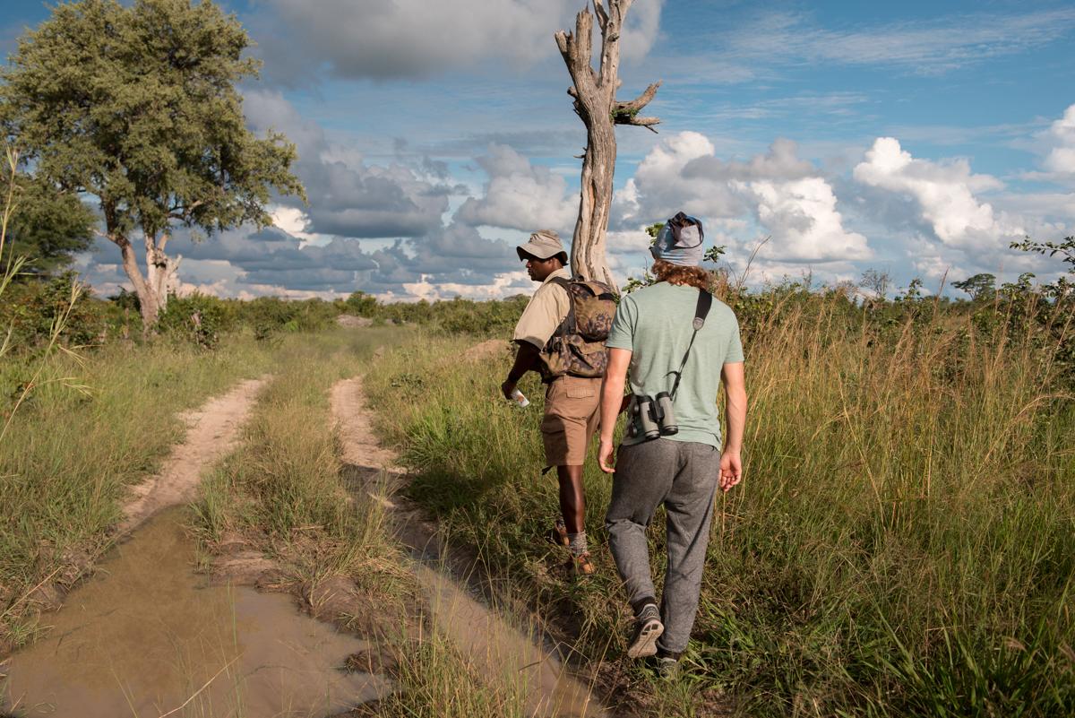 Elephants Eye Hwange Zimbabwe-7