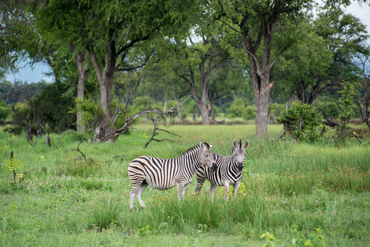 Botswana safari Khwai