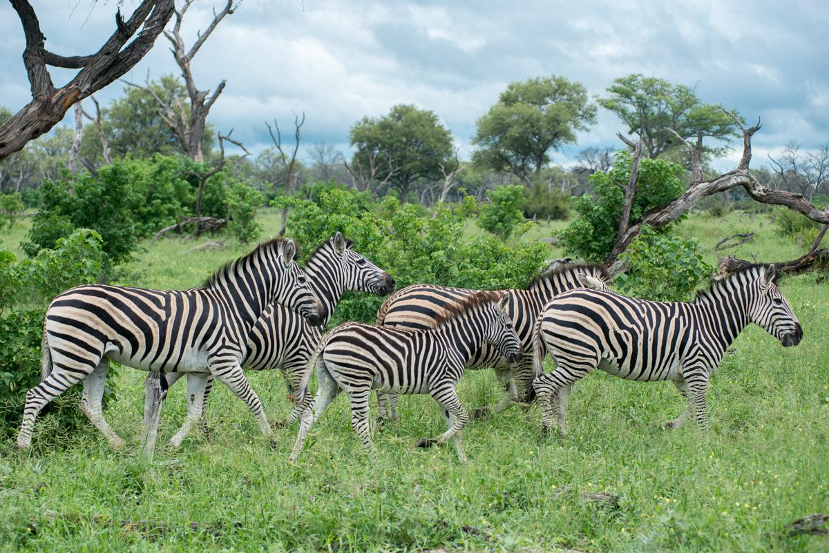 Khwai concession Botswana